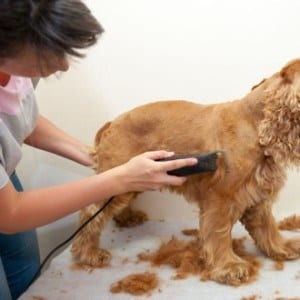 Become a Dog Groomer, Start today, learn from home an start your own business!