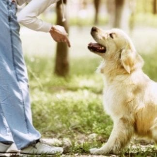 Learn Dog Training Online and Become Qualified with Tutor Support Always Available