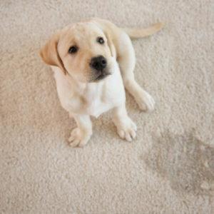 Dog Training Business Online Start Today in Ireland
