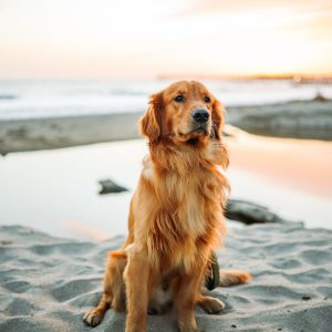 certificate-in-dog-psychology-behaviour-and-training-and-certificate-in-animal-care